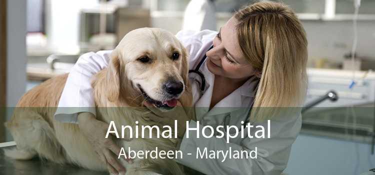 Animal Hospital Aberdeen - Maryland