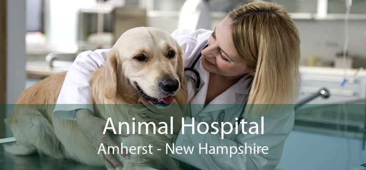 Animal Hospital Amherst - New Hampshire