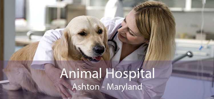 Animal Hospital Ashton - Maryland