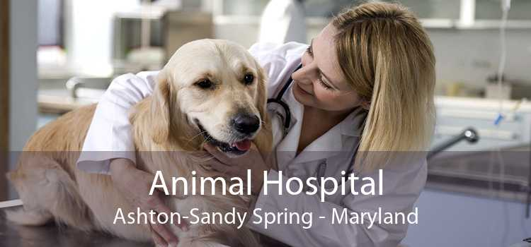 Animal Hospital Ashton-Sandy Spring - Maryland