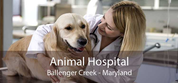Animal Hospital Ballenger Creek - Maryland