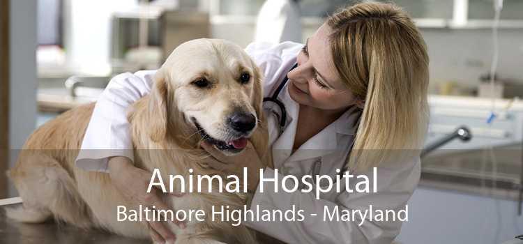 Animal Hospital Baltimore Highlands - Maryland