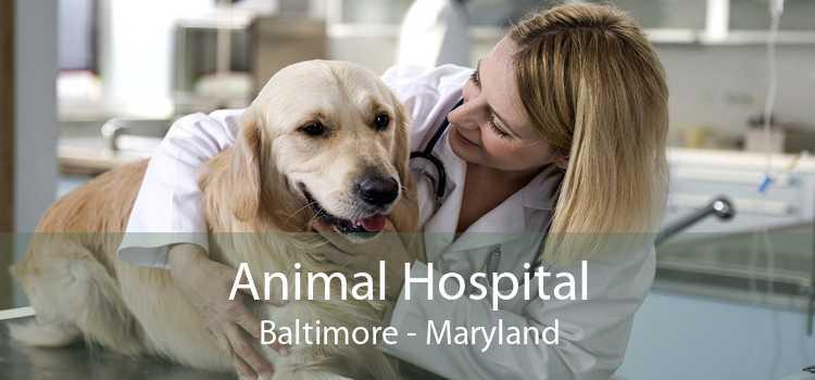 Animal Hospital Baltimore - Maryland
