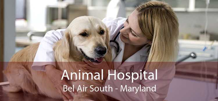 Animal Hospital Bel Air South - Maryland