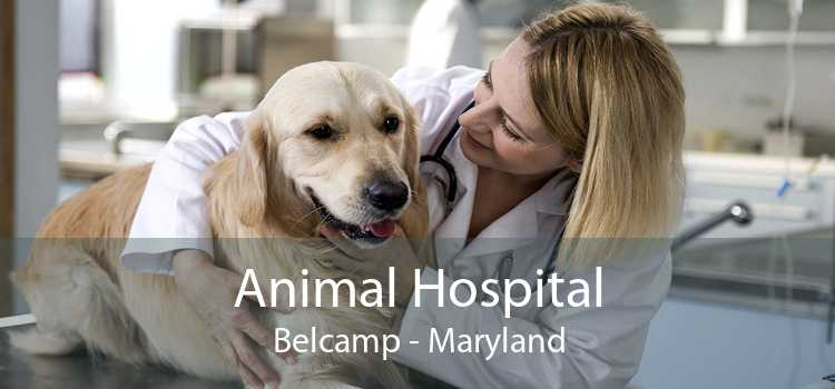 Animal Hospital Belcamp - Maryland