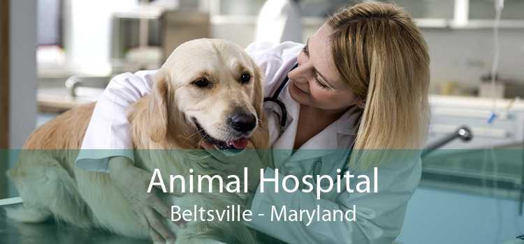 Animal Hospital Beltsville - Maryland