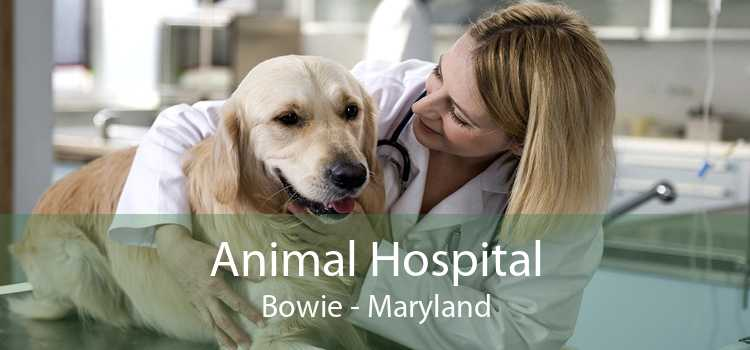 Animal Hospital Bowie - Maryland