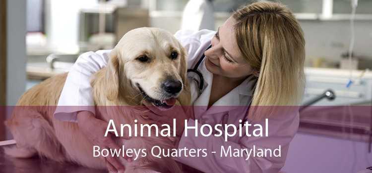 Animal Hospital Bowleys Quarters - Maryland