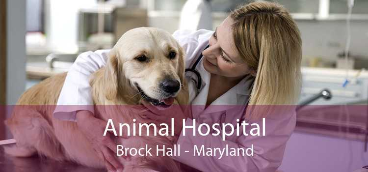Animal Hospital Brock Hall - Maryland