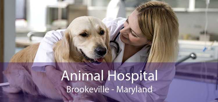 Animal Hospital Brookeville - Maryland