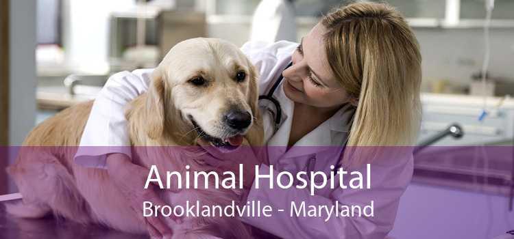 Animal Hospital Brooklandville - Maryland