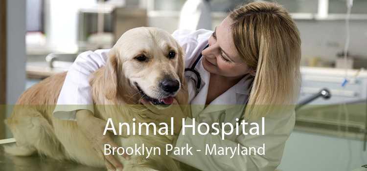 Animal Hospital Brooklyn Park - Maryland