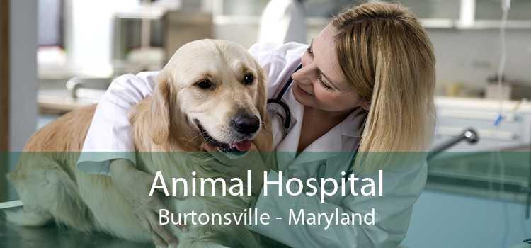 Animal Hospital Burtonsville - Maryland