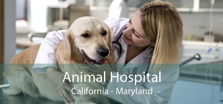 Animal Hospital California - Maryland