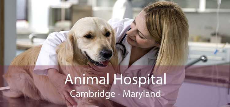 Animal Hospital Cambridge - Maryland