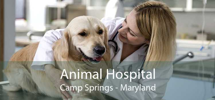Animal Hospital Camp Springs - Maryland
