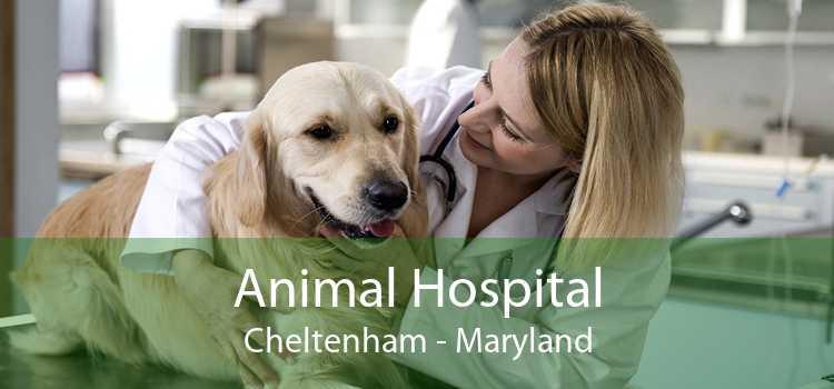 Animal Hospital Cheltenham - Maryland