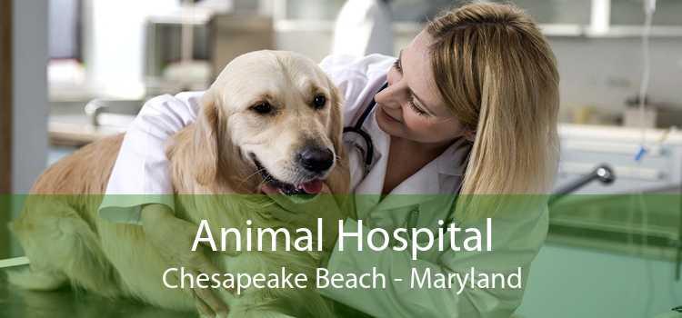 Animal Hospital Chesapeake Beach - Maryland