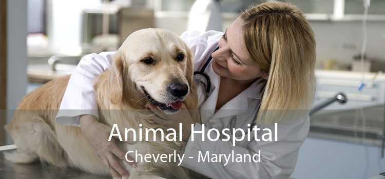 Animal Hospital Cheverly - Maryland