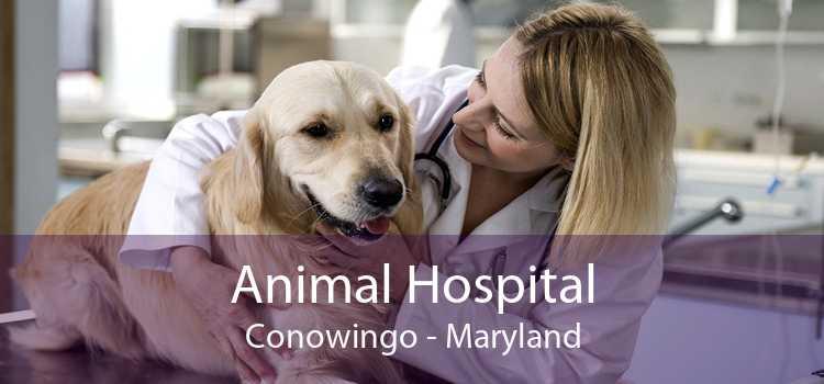 Animal Hospital Conowingo - Maryland