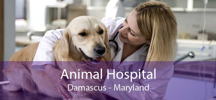 Animal Hospital Damascus - Maryland