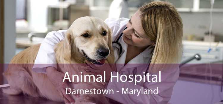 Animal Hospital Darnestown - Maryland