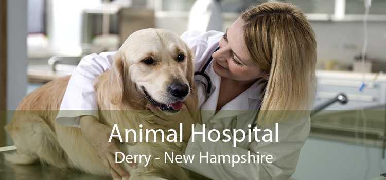 Animal Hospital Derry - New Hampshire