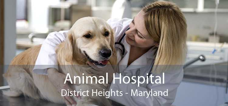 Animal Hospital District Heights - Maryland