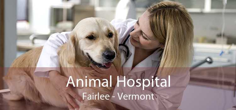 Animal Hospital Fairlee - Vermont