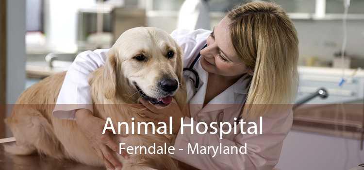 Animal Hospital Ferndale - Maryland