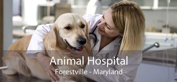 Animal Hospital Forestville - Maryland