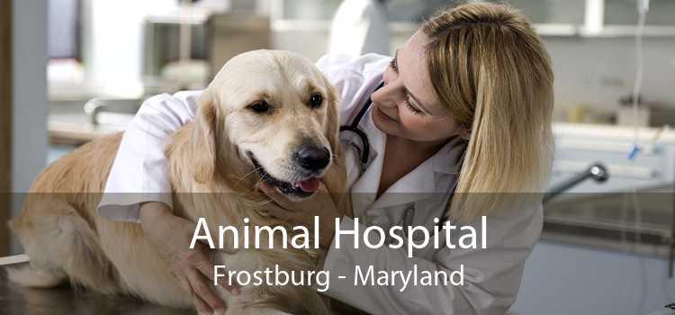 Animal Hospital Frostburg - Maryland