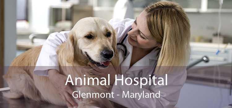 Animal Hospital Glenmont - Maryland