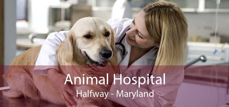 Animal Hospital Halfway - Maryland