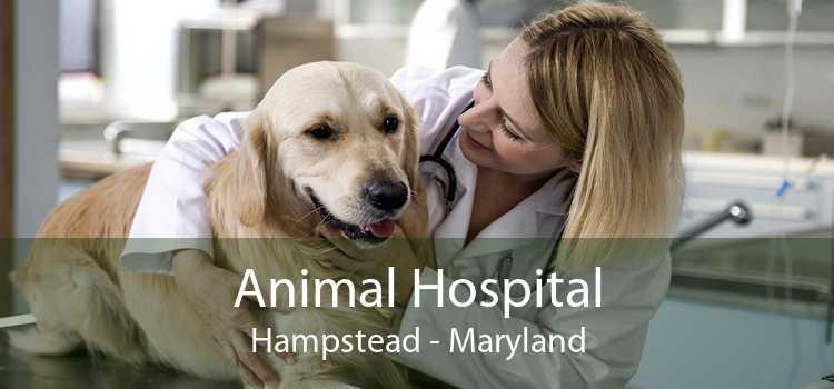 Animal Hospital Hampstead - Maryland