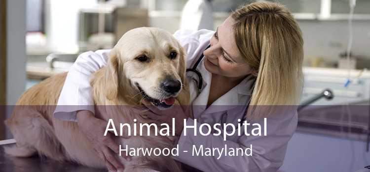 Animal Hospital Harwood - Maryland