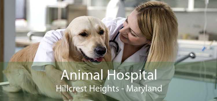 Animal Hospital Hillcrest Heights - Maryland