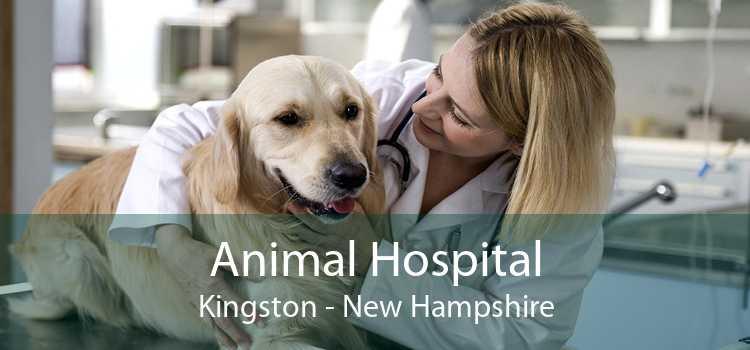 Animal Hospital Kingston - New Hampshire
