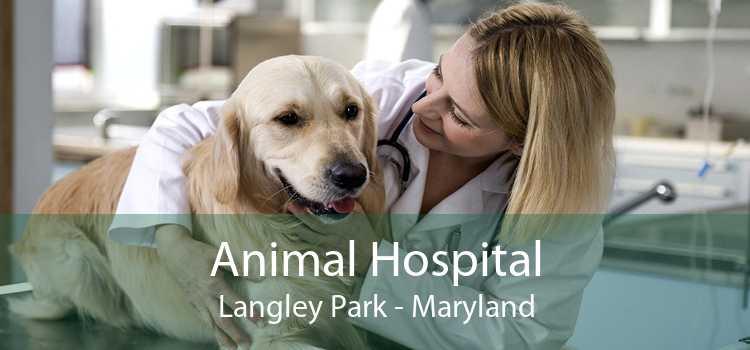 Animal Hospital Langley Park - Maryland