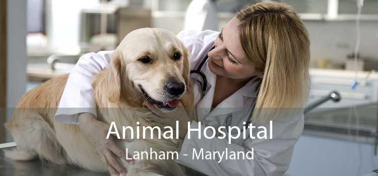 Animal Hospital Lanham - Maryland