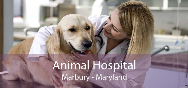 Animal Hospital Marbury - Maryland