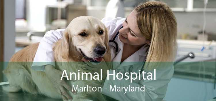 Animal Hospital Marlton - Maryland