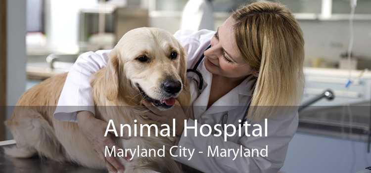 Animal Hospital Maryland City - Maryland