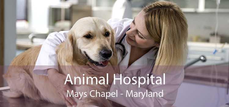 Animal Hospital Mays Chapel - Maryland