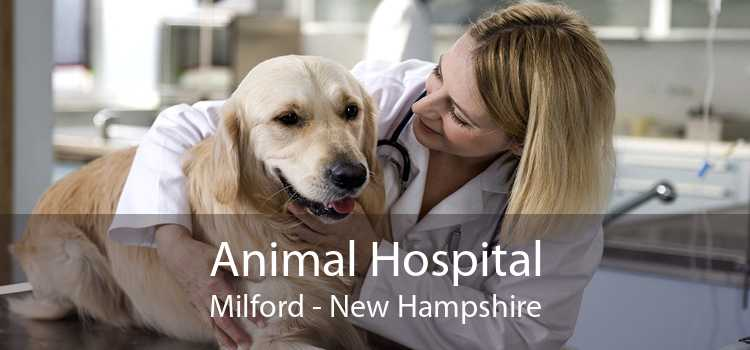 Animal Hospital Milford - New Hampshire
