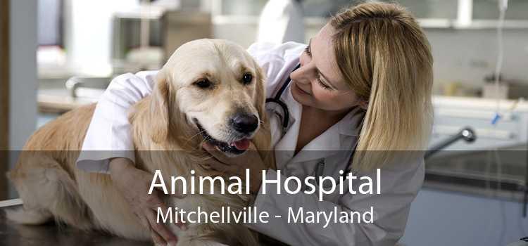 Animal Hospital Mitchellville - Maryland