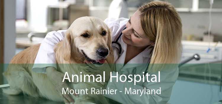 Animal Hospital Mount Rainier - Maryland