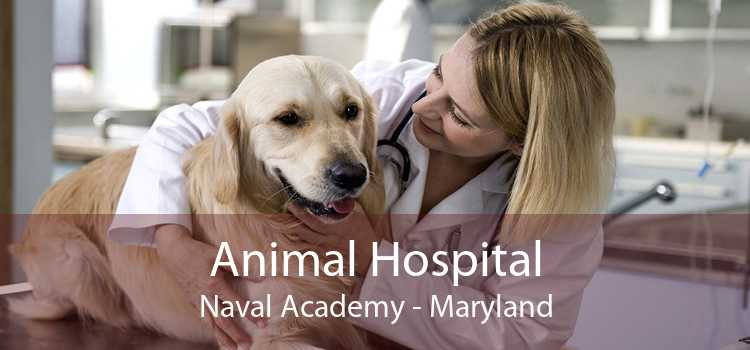 Animal Hospital Naval Academy - Maryland