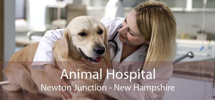 Animal Hospital Newton Junction - New Hampshire