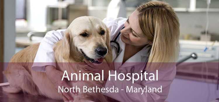 Animal Hospital North Bethesda - Maryland